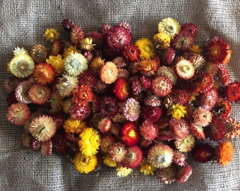 Dried Strawflower heads (orange/yellow tones)