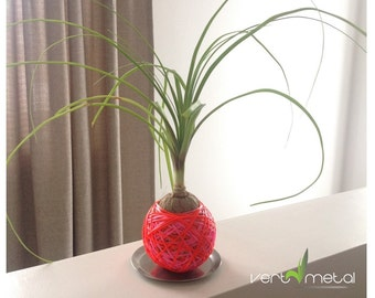 Pink / red sphere plant kokedama style