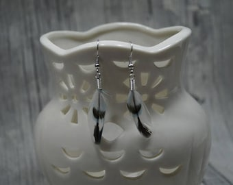 Blue white Budgerigar feather earrings
