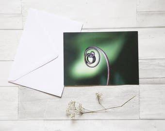 Passion fruit tendril flower photo greeting card (birthday card, flower, passion flower, passion fruit, tendril, curve, nature, photo, print