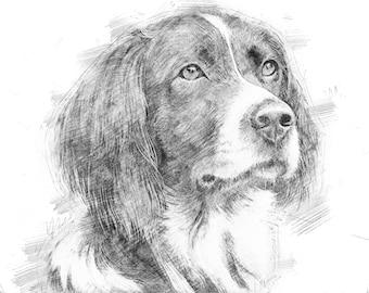 Custom pet portrait, dog portrait, custom dog portrait, custom portrait, pet portrait custom, custom pencils portrait pencil drawing pencils