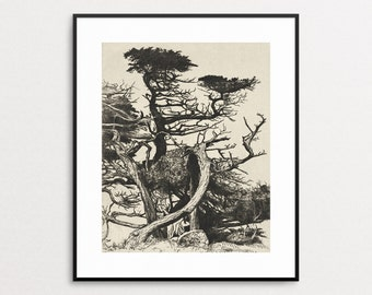 Line of Beauty by Ernest Haskell, 1920 - Cypress Tree Print - California Cypress Wall Art - Vintage California Art - Monterey Cypress