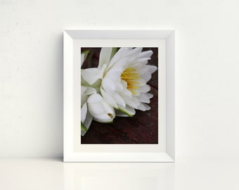 Nature Photography - Flower Photography - Photography - Water Lily Home Decor - Wall Art - Water Lily Photo - Waterlily - Sentiment Print
