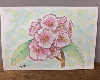 Spring flowers blooming pink