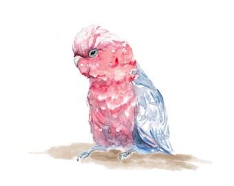 Galah Cockatoo - Unique Watercolour Illustration -  Australian Birds Series  - Wall Art Print - Poster