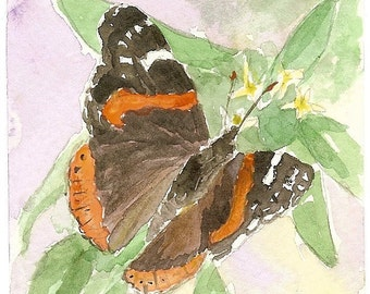 Red Admiral I
