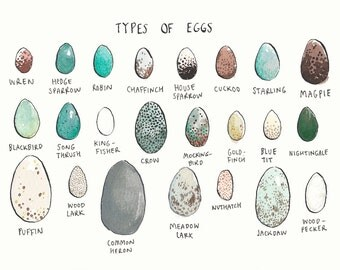 Types of Eggs Greeting Card