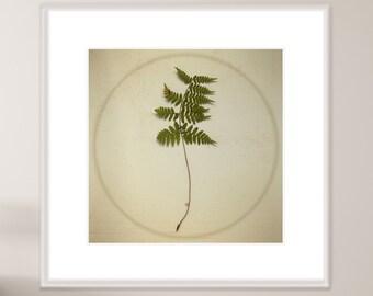 Green Wall Art, Botanical Art, Leaf Photography, Minimal Plant Art, Botanical Print, Botanical Art, Fern Art, Pressed Fern, Nature Poster