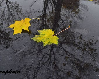 photography leaves autumn yellow with black tree reflection