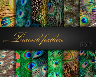 Peacock Feathers / Feathers Paper Pack / Feathers Scrapbook Paper / Feathers Paper / Peacock / Feathers Digital Paper / Peacock Paper