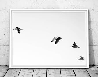 Minimalist Print, Seagull Art, Seagull Print, Minimalist, Wall Art, Digital Print, Minimalist Printable Art, Black and White, Wall Art Print