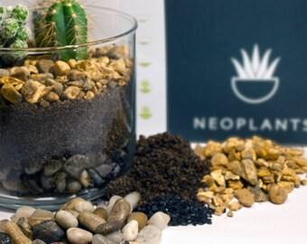 Cacti terrarium kit