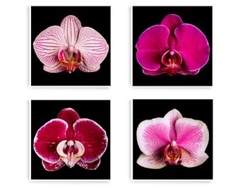 Large Botanical Prints, Flower Photograph, Floral Wall Art, Pink Flower Wall Art, Set of 4 Prints, Bedroom Wall Art, 4 Square Prints, Orchid