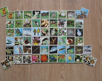 Vintage memory with pictures of animals and flowers (114 cards) in wooden storage box.