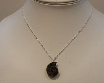 A Single Ammonite on a 925 Sterling Silver Chain
