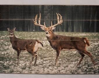 Wildlife Pallet Prints