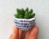Tiny succulent planter pots, BLUE/WHITE baby succulent/cactus pot flower pot with saucer