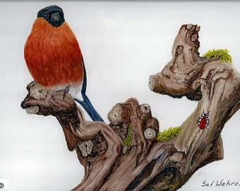 Fine art painting, watercolor, birds, Northern bullfinch
