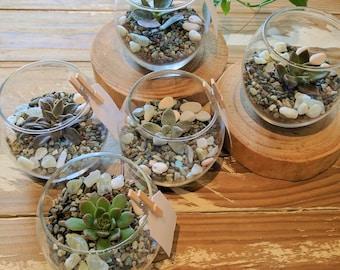 Fishbowl Terrarium Succulent Wedding Favours/ Bonbonniere - Brisbane, Gold Coast, Ipswich and surrounding suburbs