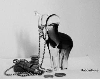 Print of Elephant 35mm Photograph