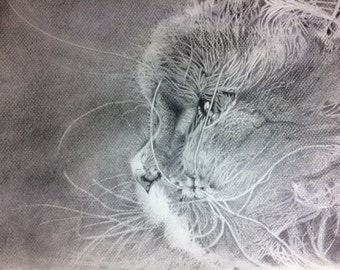Graphite on paper Canson  - the cat