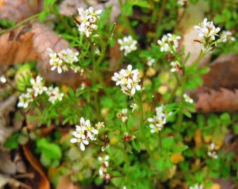 White wildflowers...