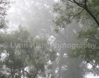 Forest Fog Photo, Morning Fog Photo, Misty Photo, Forest Photo, Fog Photo, Nature Photo, Home Decor,Original Photo,Original Art,Canvas Print