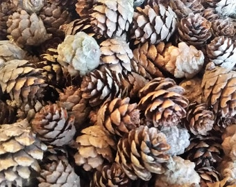 Small Black Spruce Pine Cones, Natural Pinecones, Home or Wedding Decor, Fall or Winter Decorations, Crafts Wreaths Ornaments Potpourri