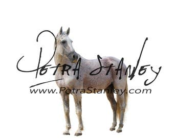 Horse Overlay - White Horse - Transparent PNG Horse - Farm animals - Barnyard Animal - Photography Photoshop Overlay - Instant Download.