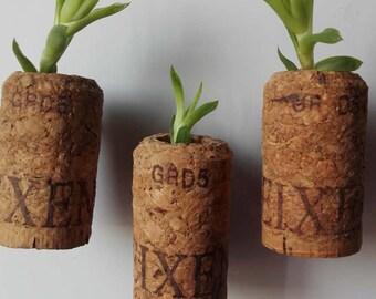 Succulent Cork Magnet,Wine Cork Magnet , Cactus, Air Plants, Variety Mix - WINE CORK MAGNETS - Wedding Favors, Guest Favors, Gardens