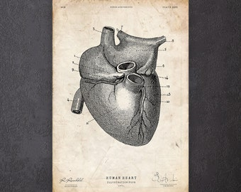 Heart anatomy art print Cardiologist gift Heart wall art Surgeon gift CA038