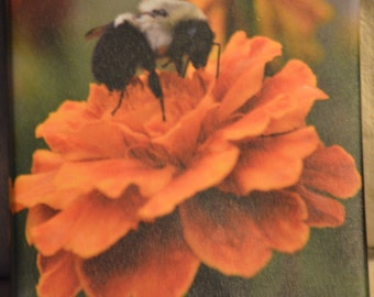 8x8 Bumble bee on flower photo canvas print
