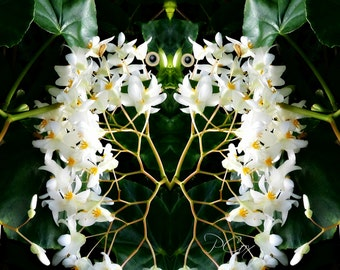 White Orchid Flower Fairy