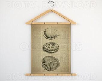 Nautical print, Dictionary wall art, Sea shell prints, Beach print, Instant digital, 11x14 illustration, Artwork download, 8x10 printable