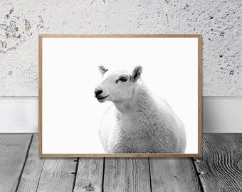 Farm Animal Print - Sheep Print, Digital Print, Farm Style, Country Cottage Decor, Farm Wall Art, Black And White Photo, Barnyard Print