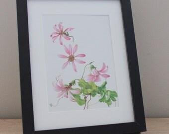 Original Vintage Mutisia Retusa Pink Flower Print Framed (Brown or Black) Office Home Decor Minimalist Green Floral Flowers Plant Art Botany