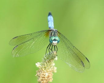 Set of 8 Assorted Dragonfly Note Cards | Greeting Cards | Nature Stationery | Nature Photography | Insect Photography