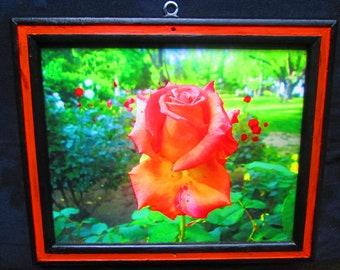 Framed Print - Orange Rose