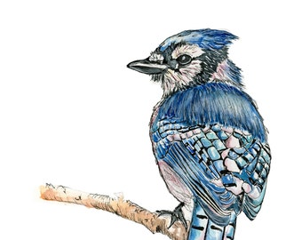 Bluebird: watercolor print