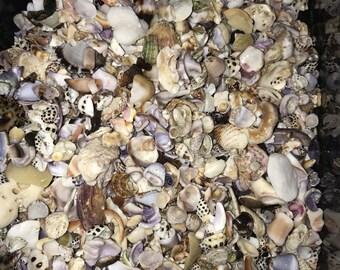 Bulk Shell Fragments, hawaiian seashell, seashell craft supply, seashell jewelry supply, home decor, beach wedding, hawaii shell