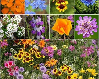 Grow Your Own  Wild Flower Mix, Organic Wild Flowers, GMO Free