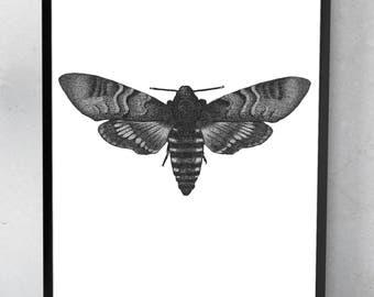 Small moth print