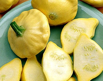 Summer Squash Seeds-Scallop Yellow Bush-Organic-NON-GMO