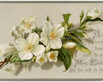 Antique Easter Victorian Trade Card White Flowers Plain Back