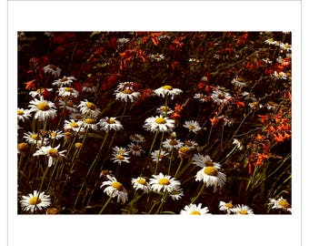 Fine Art Print, Photographic Landscape, Summer, Countryside, Garden, Flowers,Britain,Colour