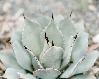 nature, fine art photography, botanical print, wall art, home decor, cactus photography