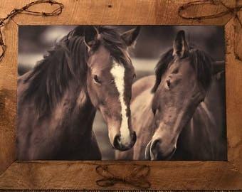 2 Horse Foals