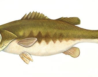 Wide Mouth Bass Painting, Giclee print, green fish, fish painting, bass painting