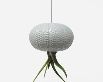 Hanging Gray Jellyfish Air Plant Sea Urchin
