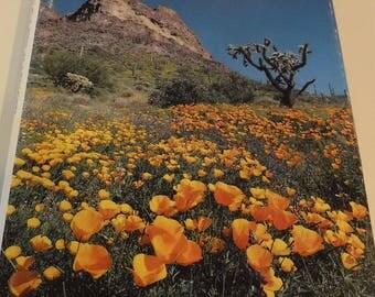 The Great Southwest, Natonal Geographic Society, 1980, Travel, Deserts